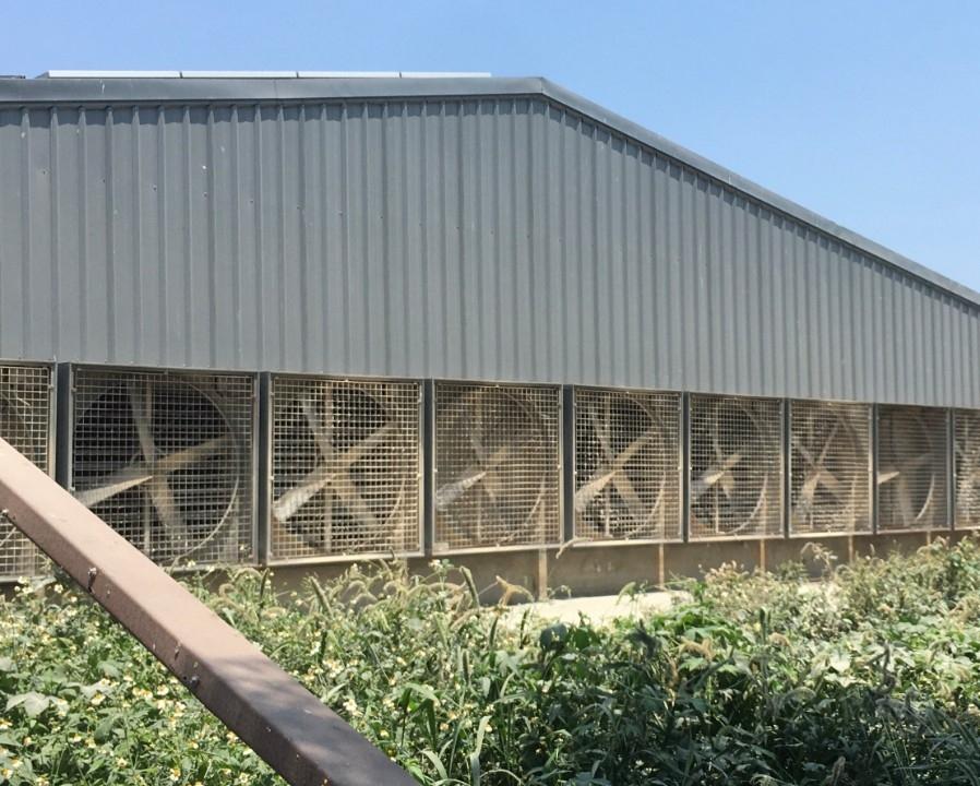 養雞戶利用大型風扇排除雞屎味使附近居民飽受臭氣熏天。