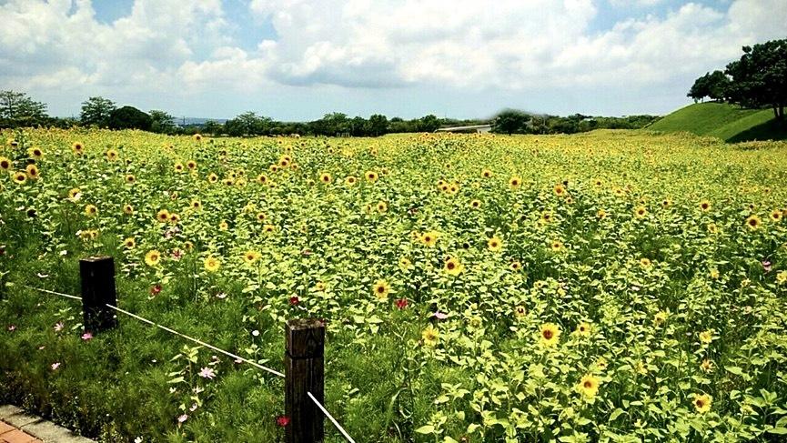 后里環保公園小山丘可俯瞰整片花田。(記者林志強翻攝)