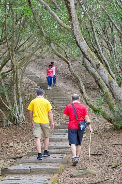 大肚萬里長城登山步道沿線可欣賞兩側林相優美、花木扶疏。(記者林俊維翻攝)