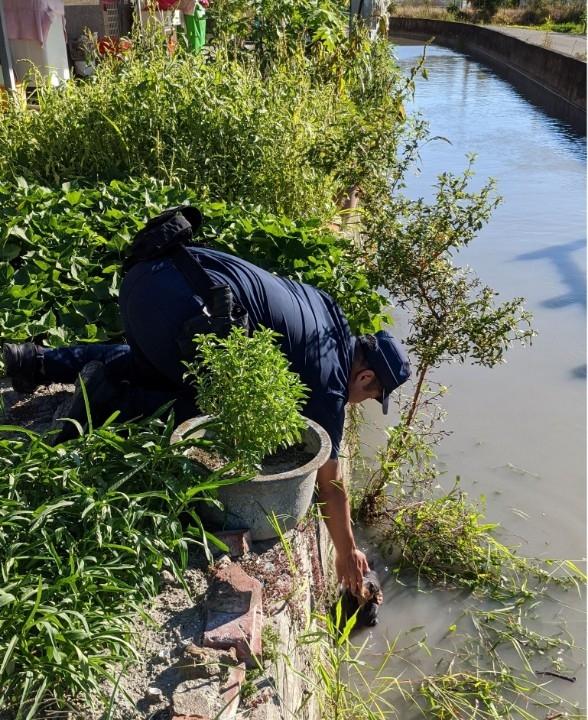 愛犬掉落2公尺深水圳  美濃警協助救援。(記者劉明吉翻攝)