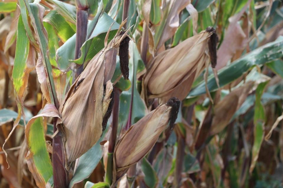 農業環境基本給付種植品項。(記者曾憲群翻攝)
