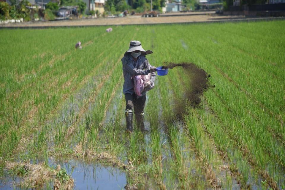 杜絕燃燒稻草 縣府加強推廣宣導分解菌施用技術及優點。(記者張光雄翻攝)