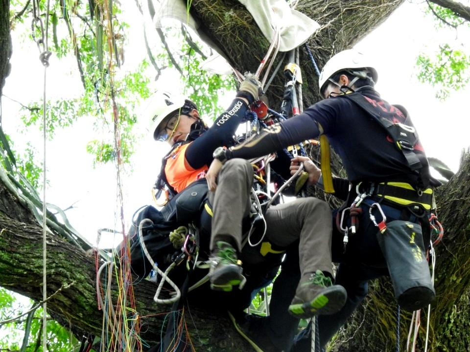 繩索高空攀樹救援訓練有成南投消防救難技能更上層樓 。(記者陳金泉翻攝)