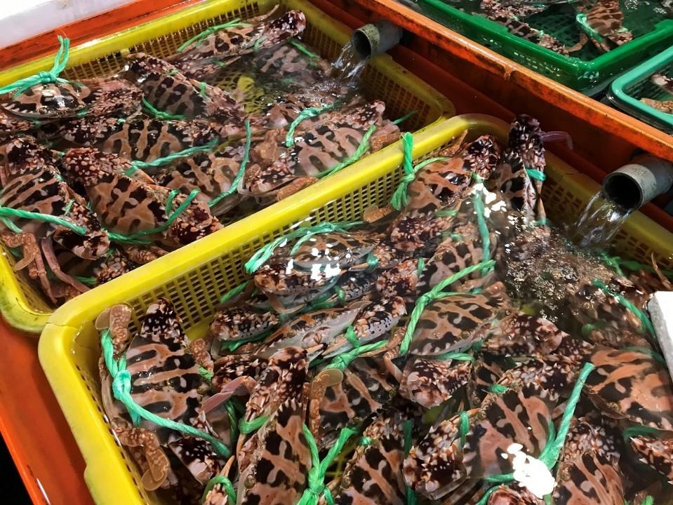 龜吼漁夫市集初一至初五發紅包 讓您牛年旺返發大財。(特約記者林有定翻攝).jpg