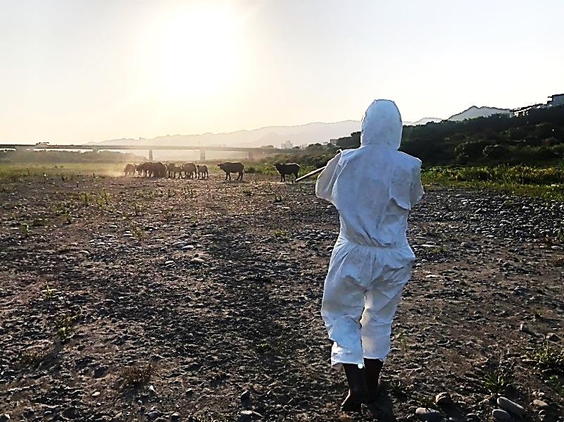 出動空拍機深入山區完成新北牛結節疹疫苗施打。(特約記者林有定翻攝).jpg