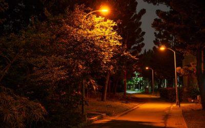專用LED燈「罩」顧螢火蟲 北市生態復育獲奇效。(特約記者林有定翻攝).jpg