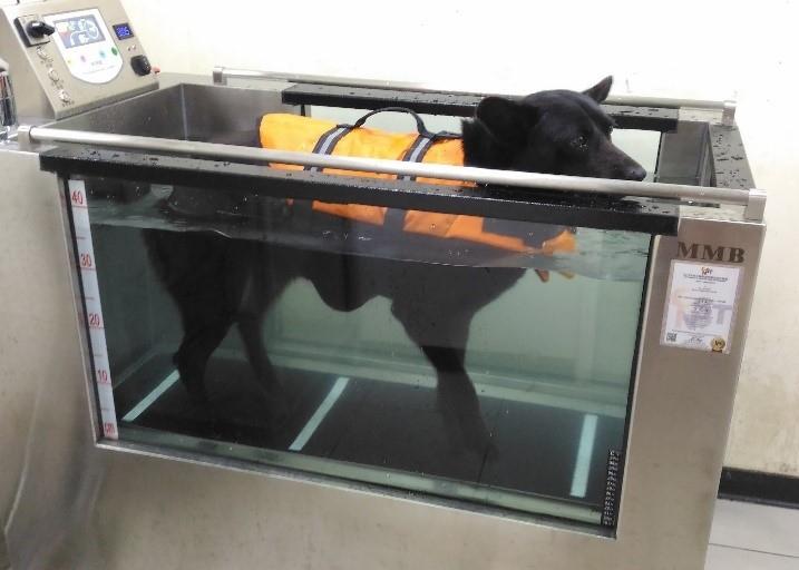 新北市動物之家水療跑步機照顧高齡毛寶貝。(特約記者林有定翻攝).jpg