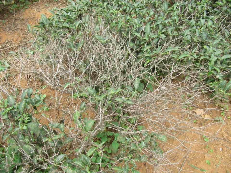 3-5月高溫乾旱農業天然災害現金救助。(記者張如慧翻攝).jpg