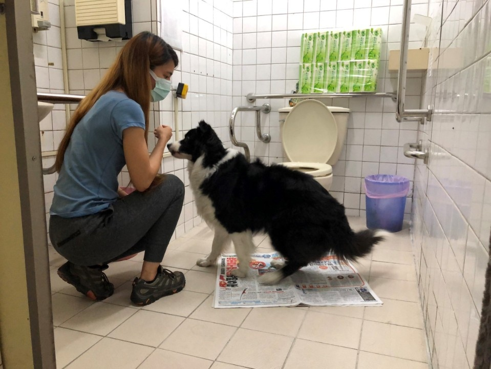 新北3妙招讓毛寶貝在家如廁保平安。(特約記者林有定翻攝).jpg