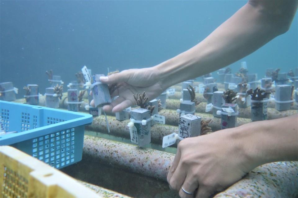 最夯的線上珊瑚小學堂即將開放報名囉!。(特約記者林有定翻攝).jpg